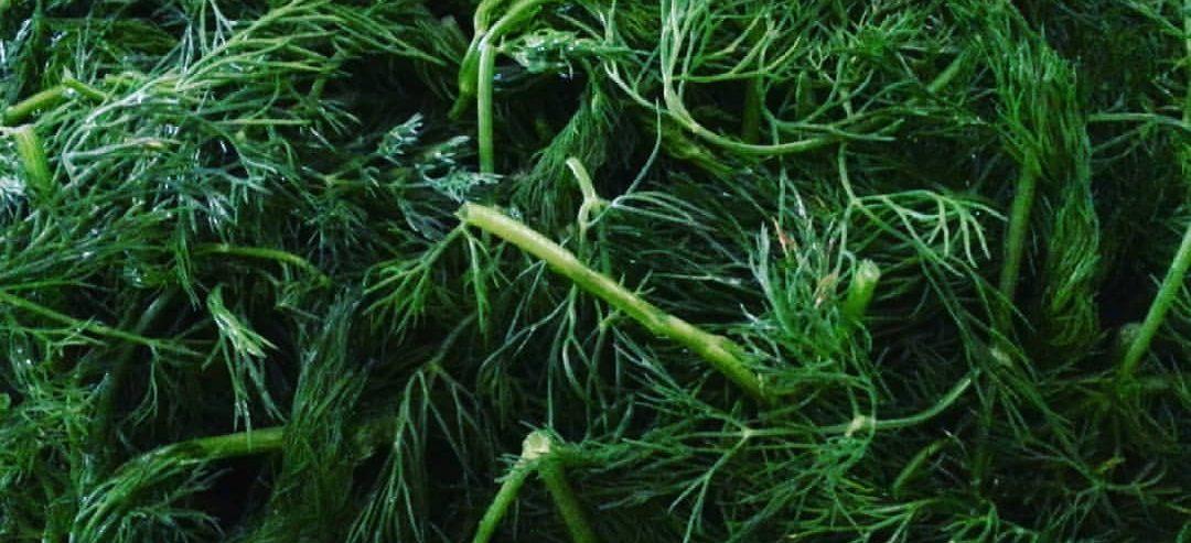 لیست سبزی های سبزی پلو و آش و قورمه سبزی و کوکوسبزی