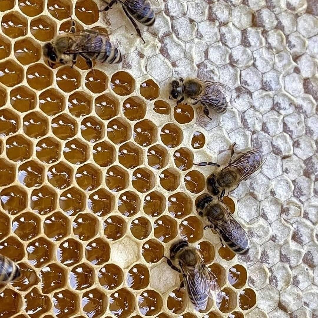 چیزهایی درباره عسل و زنبور که واقعا جالبه!