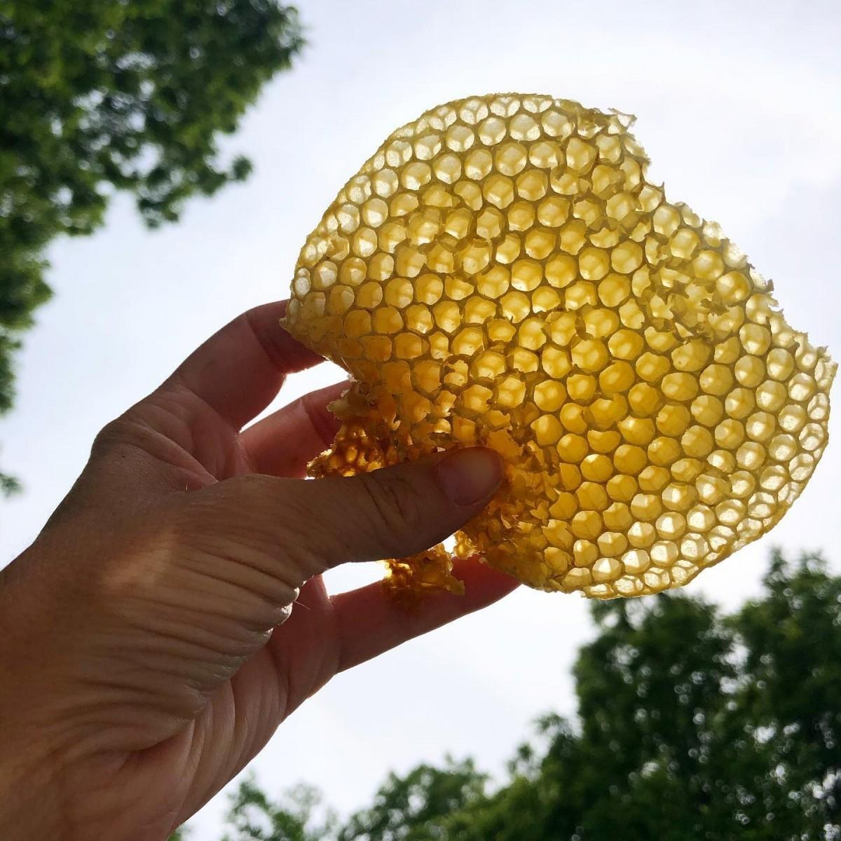 از کجا بفهمیم عسل طبیعی است؟ + طرز تهیه عسل تقلبی